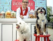 City Target Dogs